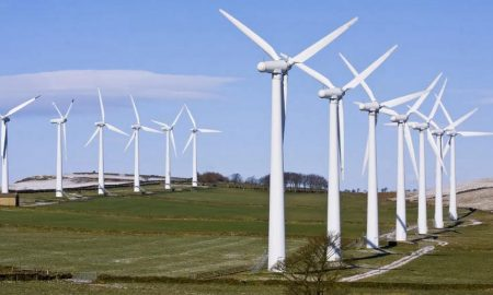 Eco-friendly energy sources proved to be hazardous to nature