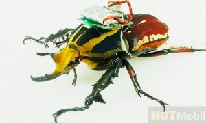 Researchers Learn to Print Insect Robots in Two Hours