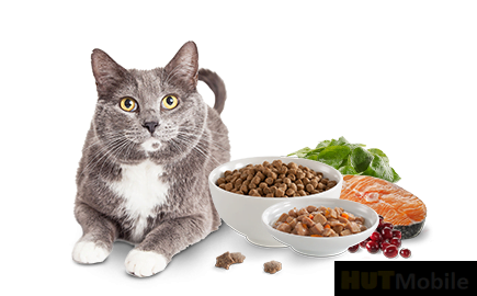 Pet food you don't know, what exactly is AAFCO?