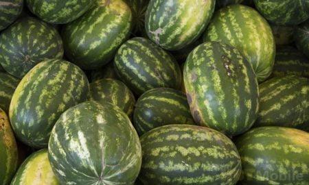 Watermelon Pearl: a stern melon-guard cat lives in Thailand