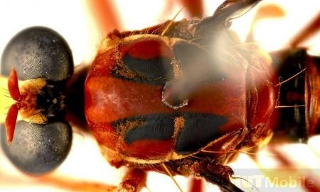 Scientists have discovered new insects and named them after superheroes